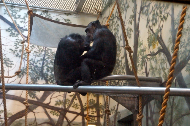 Nothing says love like nit-picking (at the Oregon Zoo).